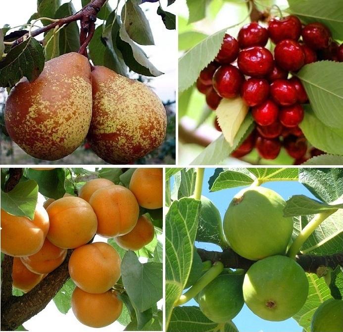 Chegaram Árvores de Fruto
