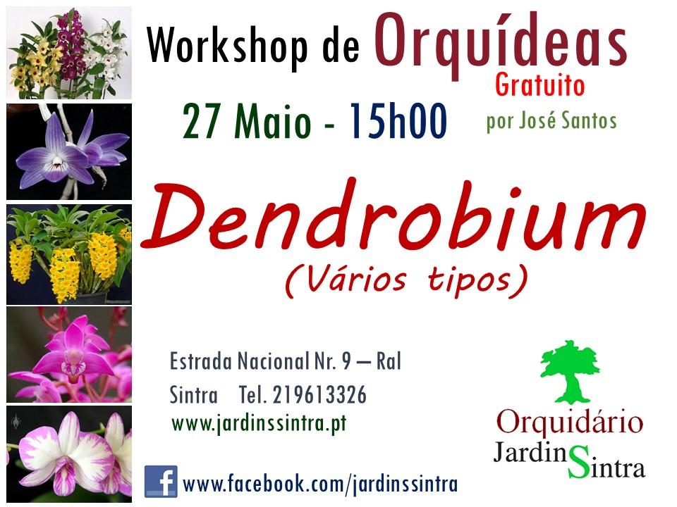 Workshop Gratuito de Orquídeas – Maio