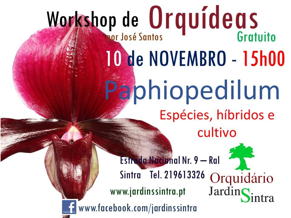 Workshop de Orquídeas – Novembro