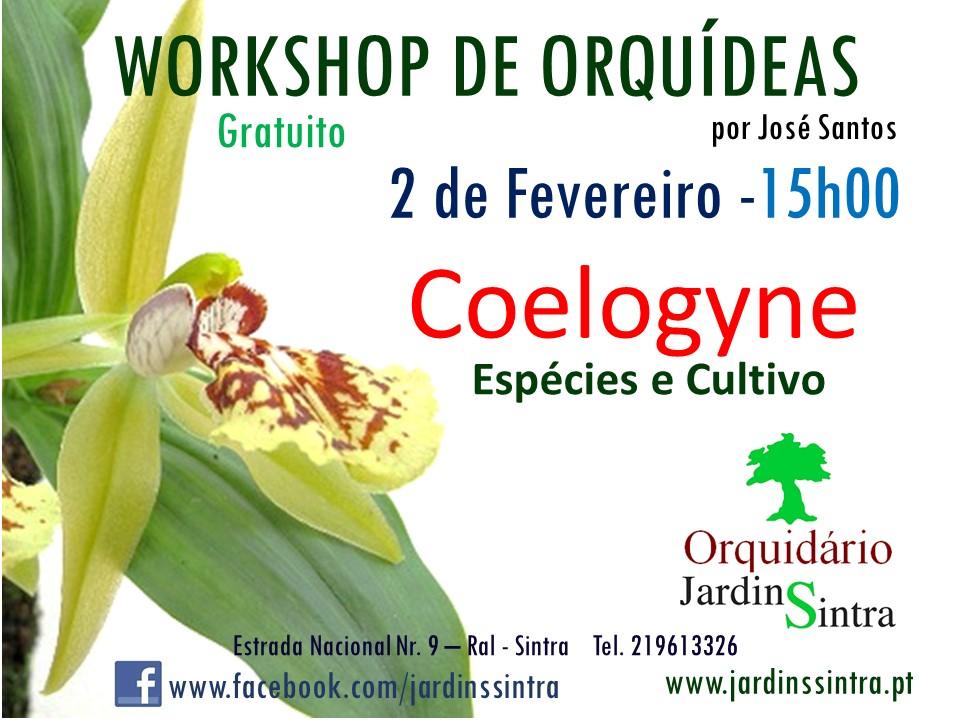 Workshop Orquídeas – Coelogyne