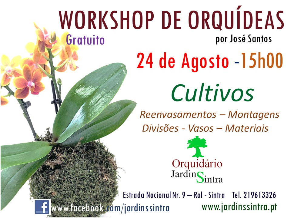 Workshop Prático de Orquídeas – Agosto