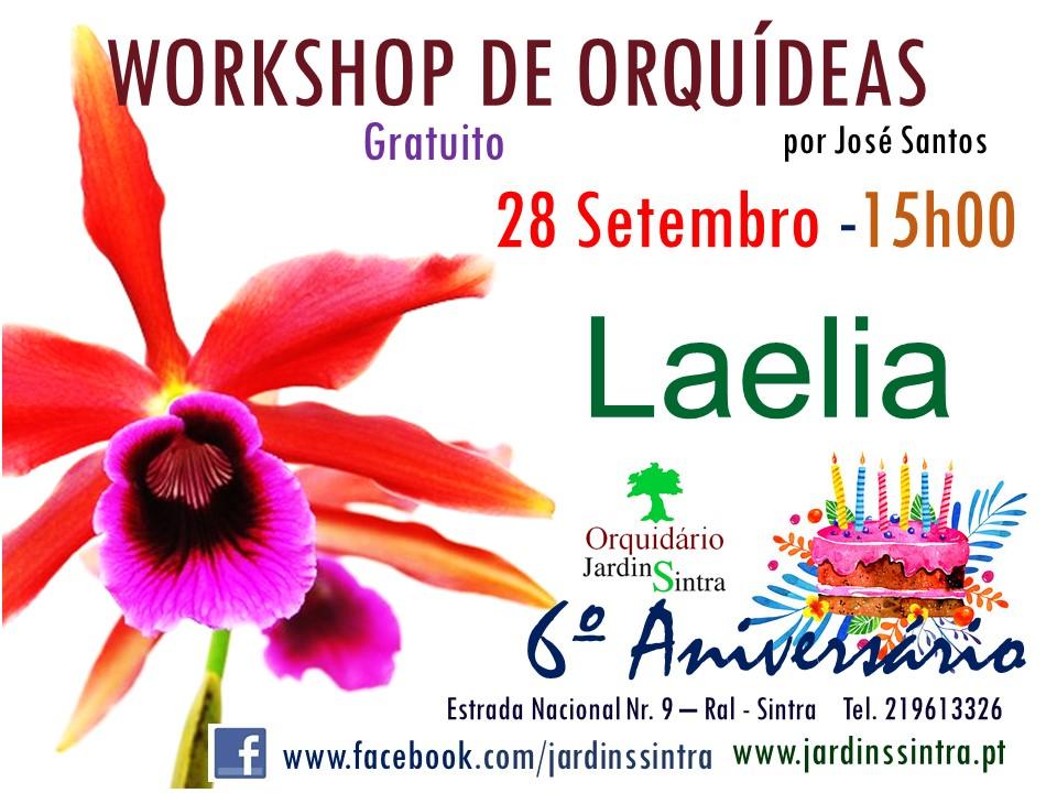 Workshop de Orquídeas de Setembro