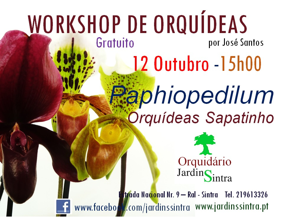 Workshop de Orquídeas – Paphiopedilum