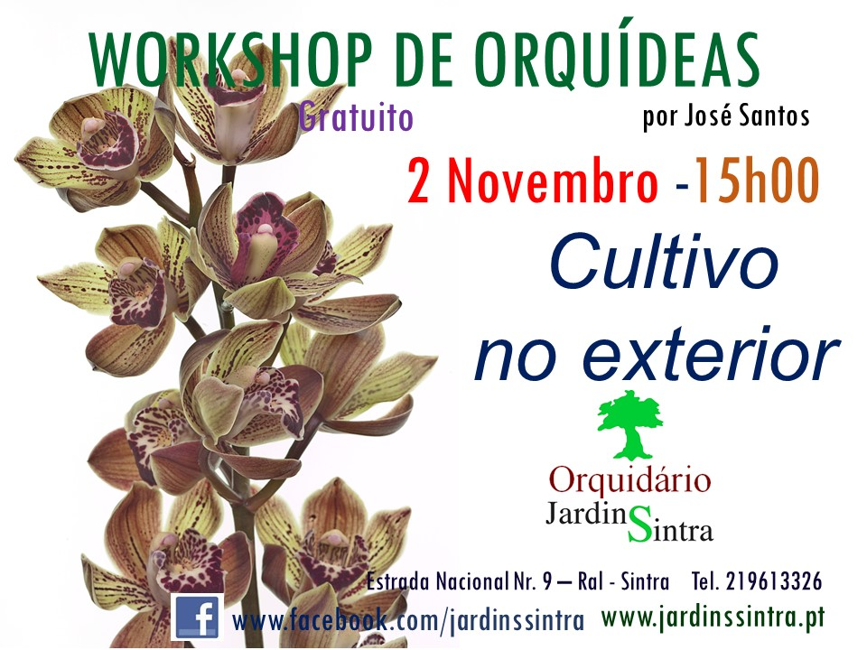 Workshop de Orquídeas de Novembro