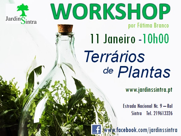 Workshop de Terrários de Plantas