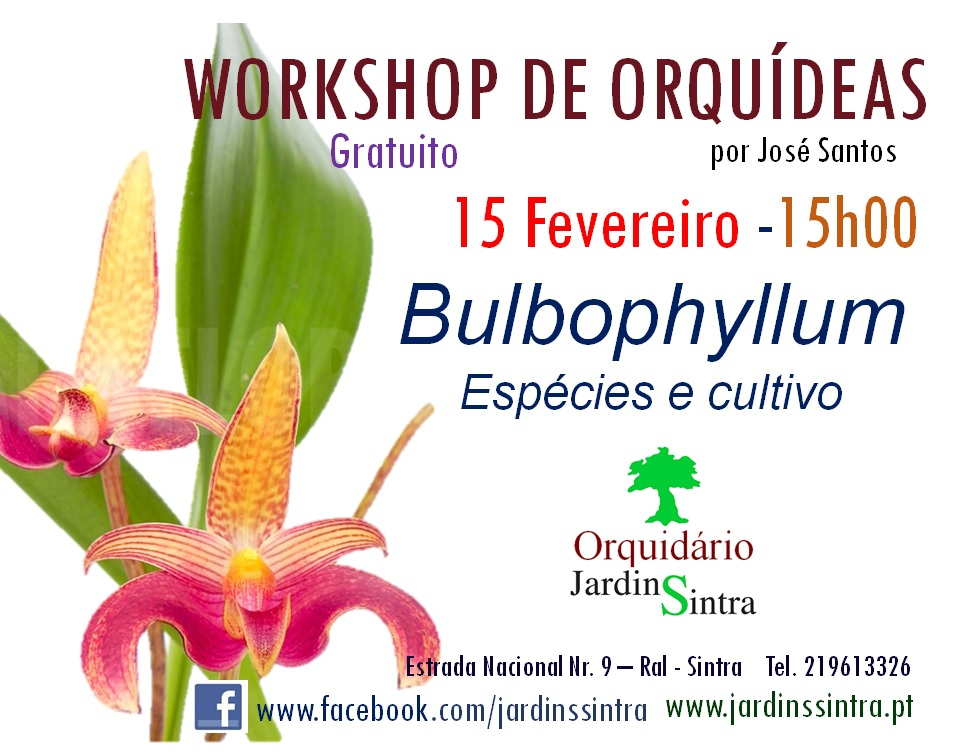 Workshop de Orquídeas – Bulbophyllum